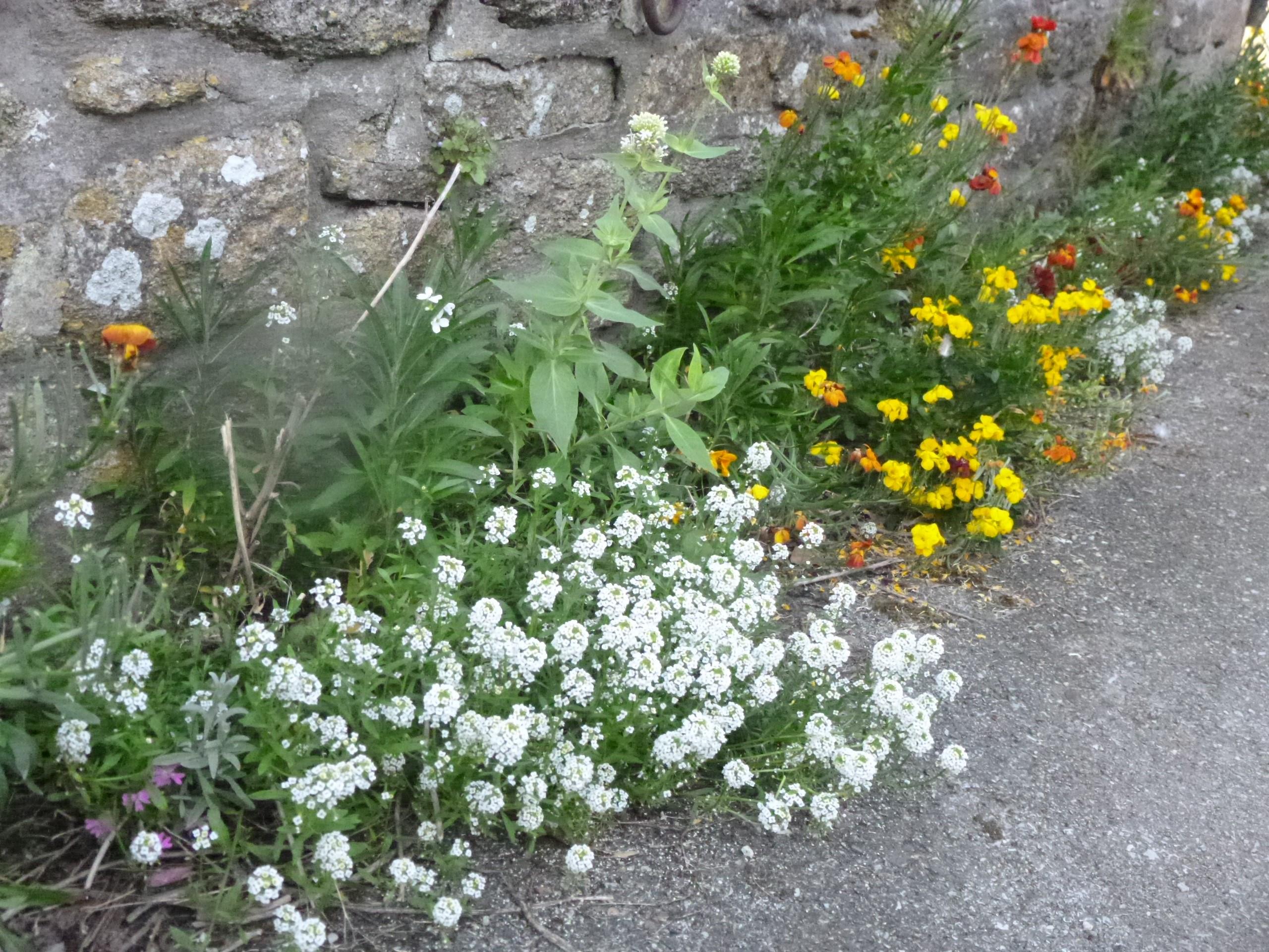 fleurs-murs